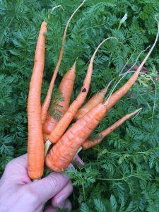Organic Compost (6)