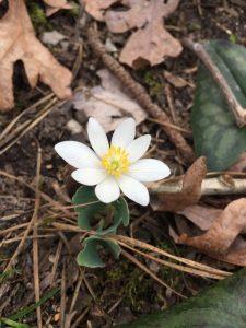 Wildflowers Spring 2020 (4)
