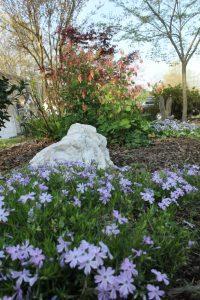 Blue Spring Flowers (14)
