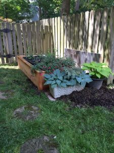Moving the No Dig Garden (3)