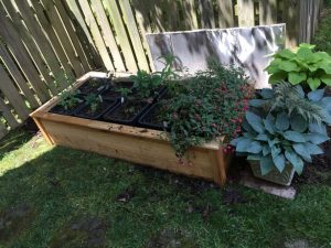 Moving the No Dig Garden (8)