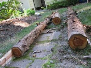 Cedar Bench NicholsNotes (8)