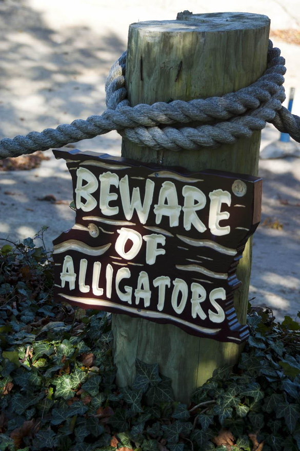 The Alligator Story – Part 1