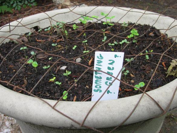 Senior Garden Labels (1)