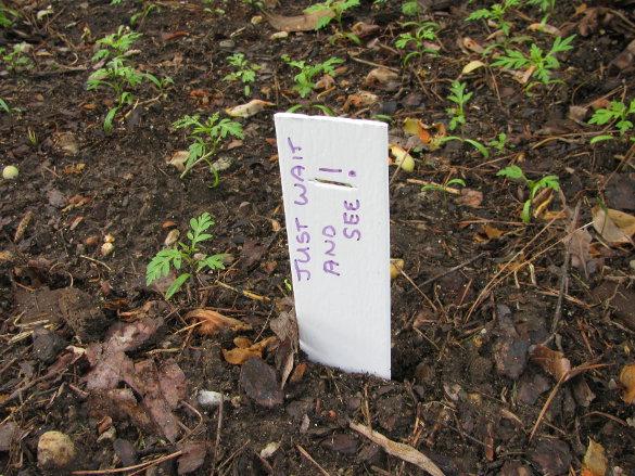 Senior Garden Labels (5)