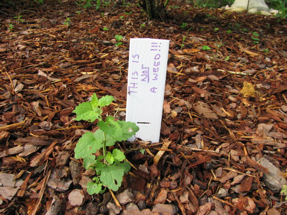Senior Garden Labels (8)