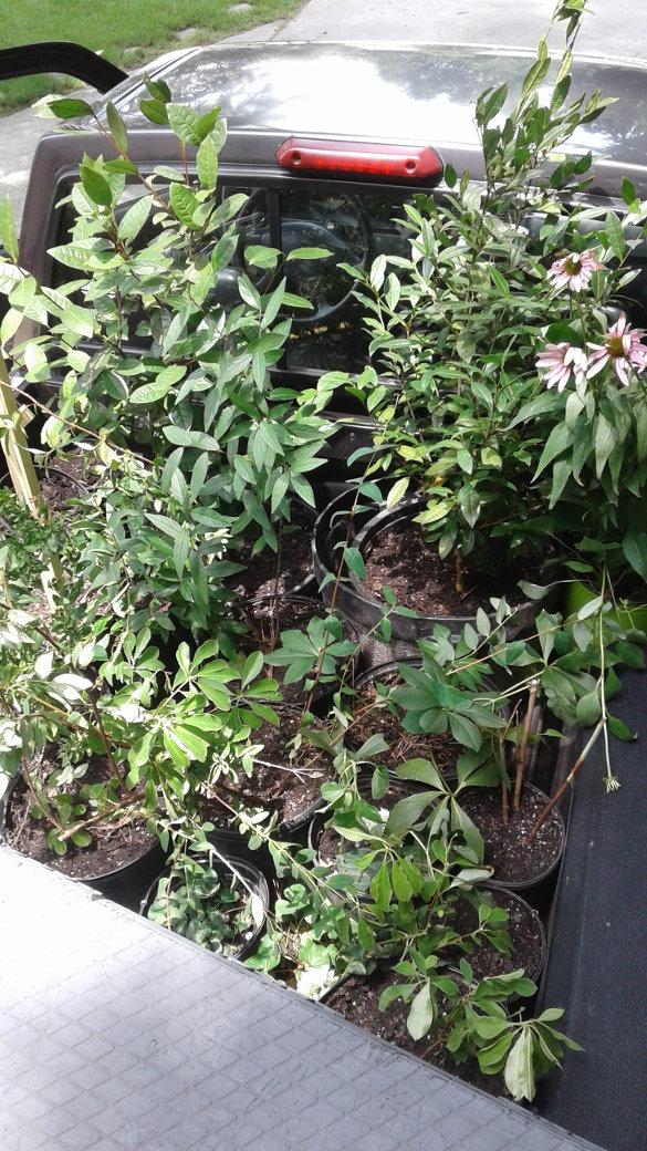 Plants in pickup truck